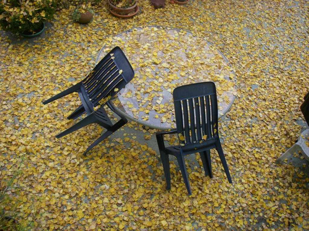 Chairs and Leaves